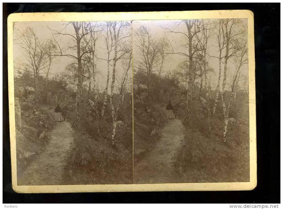 PHT4 SEINE ET MARNE Photo Originale Fin Du 19 ème Siècle, Fontainebleau Foret - Photos Stéréoscopiques