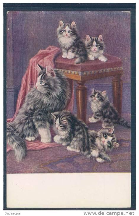 Chat, Chats, Chaton, Katze, Catz, - Chats