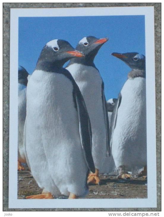 PENGUIN * Pingouin Manchot Pinguin Pinguino Pinguim Penguins Pingouins Pinguins Bird Oiseau Polar Polaire - Stickers