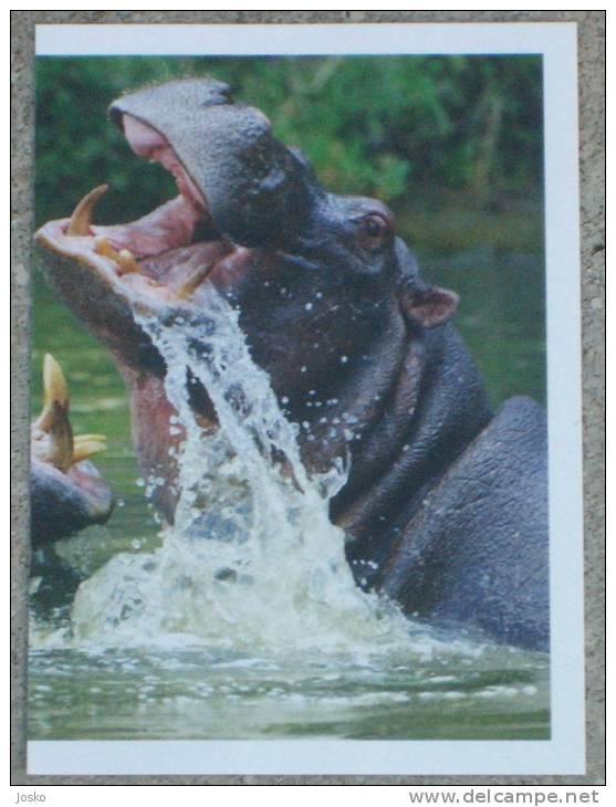 HIPPOPOTAMUS * Hippopotame Hippo Hippos Flusspferd Hipopotamo - Stickers