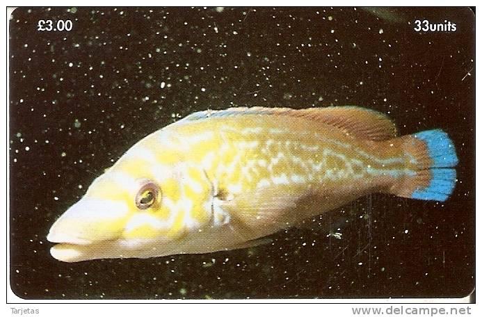 MAN-171 TARJETA DE LA ISLA DE MAN DE UN PEZ LABRUS MIXTUS (FISH) - Isla De Man