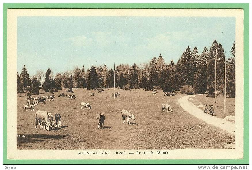 39 MIGNOVILLARD - Route De Mibois - Frankrijk