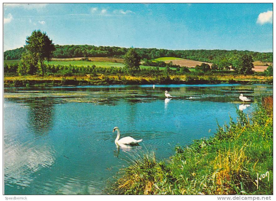 19466 Gamaches : étang à Voile On Y  Pêche Aussi.  Yvon 10.6083 Cygne Pecheur - France