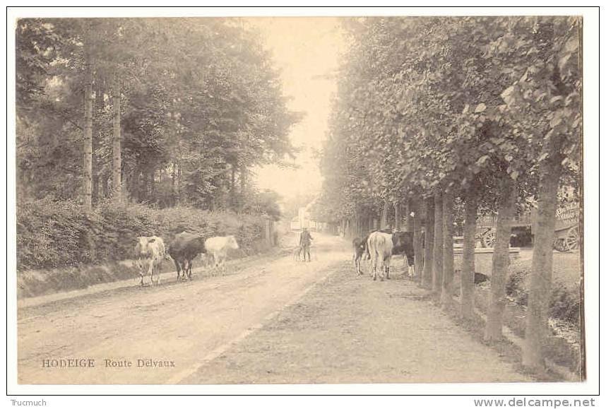D6065 - WASSEIGES - Route Delvaux  *bétail*vaches-charettes De La Firme Héraly De Waremme* - Wasseiges