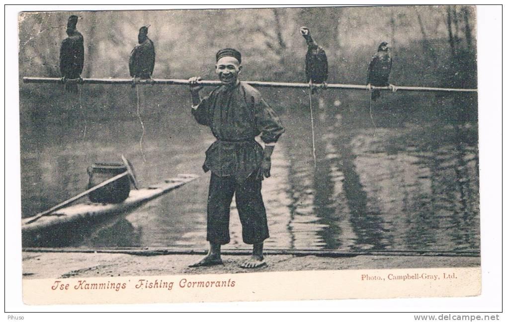 ASIA-390   CHINA : Ise Kammings Fishing Cormorants - China (Hongkong)