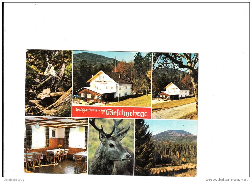 B54803 Kirschgehege Waldgaststatte Cafe Deer Cerfs Used Good Shape Back Scan  At Request - Ilsenburg
