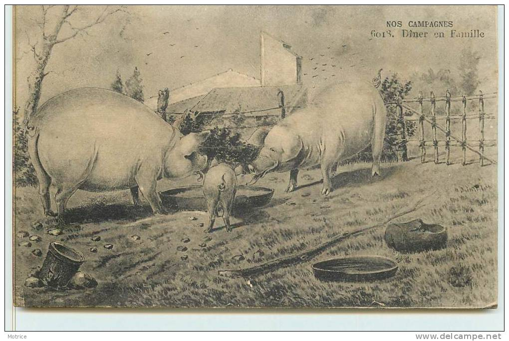 NOS CAMPAGNES  -  Diner En Familles (cochons). - Cochons