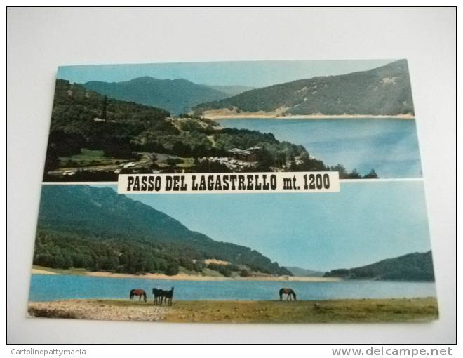 Passo Del Lagastrello Cavalli - Reggio Nell'Emilia