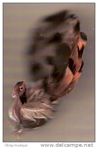 Paon Avec Vrai Plume - Oiseaux
