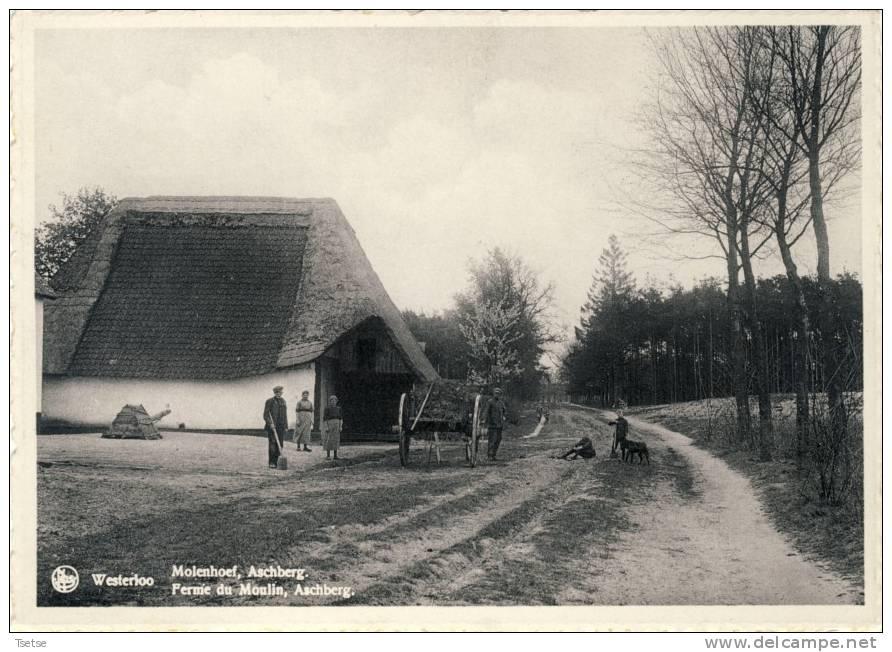 Westelo - Molenhoef, Aschberg ( Verso Zien ) - Westerlo