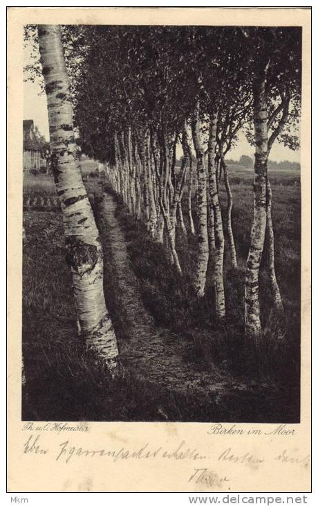Birken Im Moor - Fotografie
