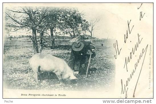 N°20007 -cpa En Périgord -deux Périgords Cherchant La Truffe- - Cochons