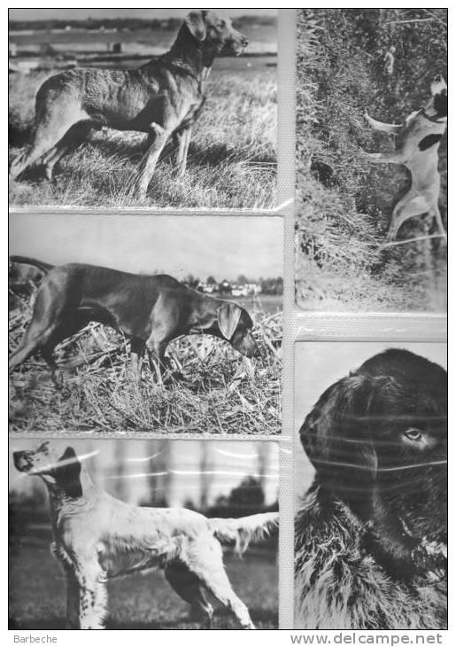 SUPERBE ALBUM SUR LES ANIMAUX 240 Cartes Très Intéressant  Voir Les Scans - Cartes Postales