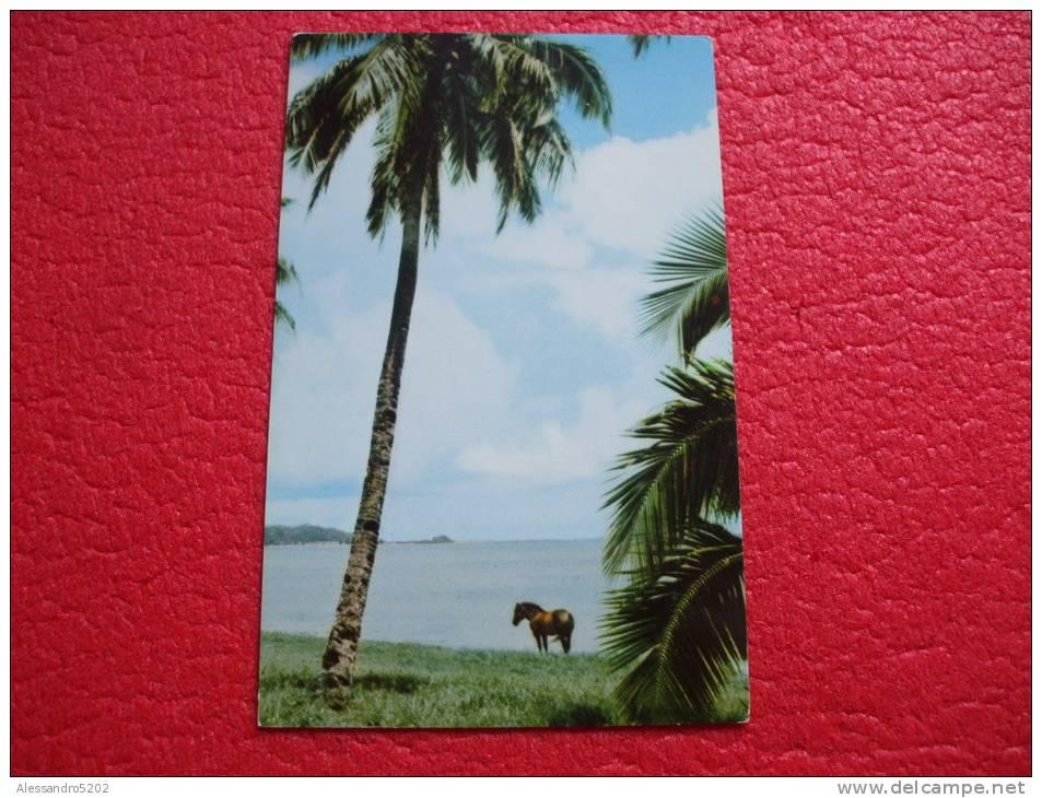 Guam - Palms Between Agana And Tamuning - Guam