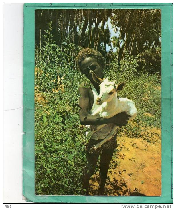 TYPE HUMAIN DJIBOUTI T F A I - Gibuti