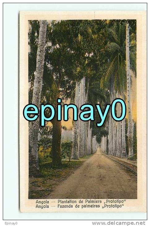 B - ANGOLA - LOANDA - Plantation De Palmiers Prototipo  - édition Souza Fontes - Angola