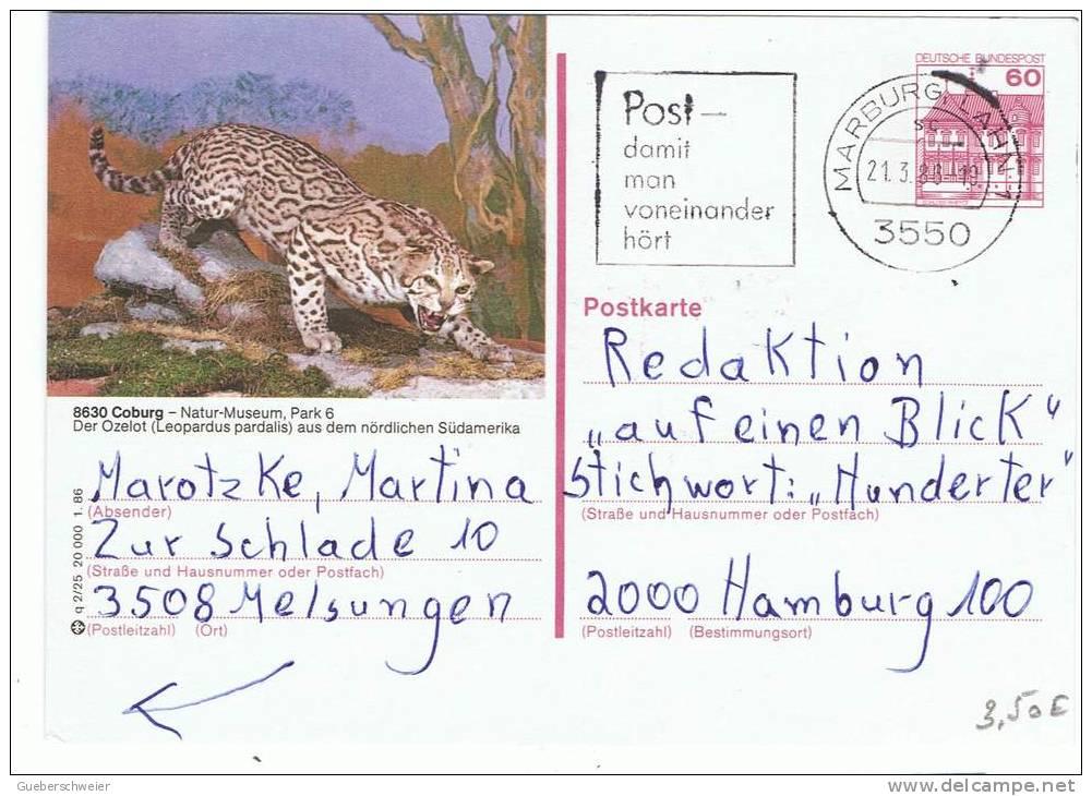 L-FEL38 - ALLEMAGNE Entier Postal Illustré Thème Félins - Ocelot - Big Cats (cats Of Prey)