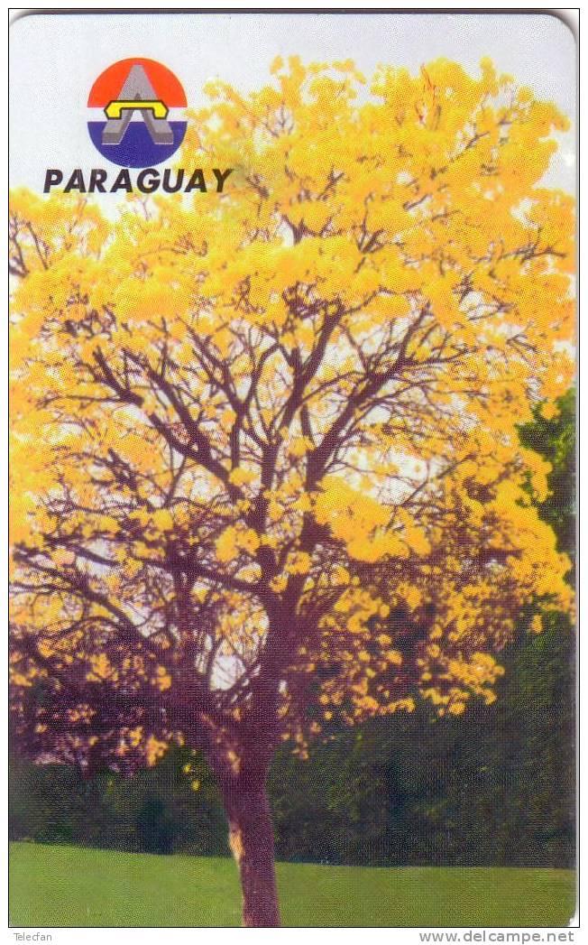 PARAGUAY 1998 20U  SUPERBE RARE - Paraguay