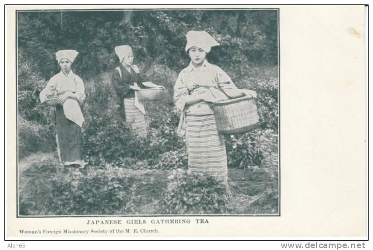 Japan, Japanese Women Pick Tea On C1900s Vintage Postcard - Cultures