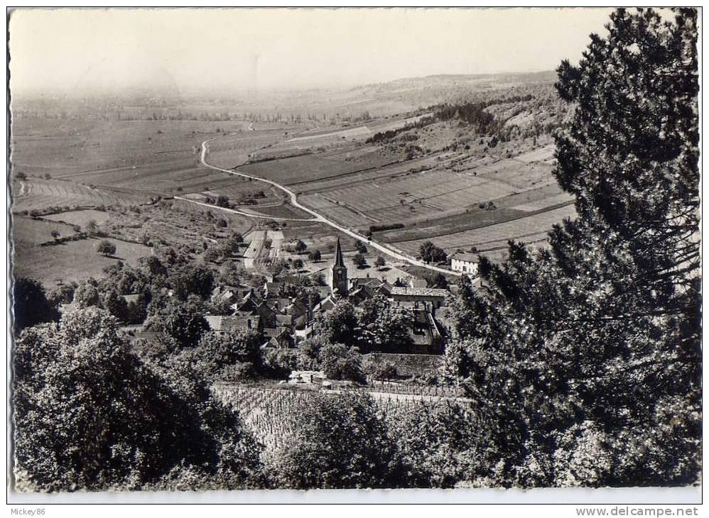 PERNAND-VERGELESSES--1962 --Vue Aérienne Sur Les Grands Crus,cpsm 10 X 15 N° 9  éd Combier--Belle Carte - Autres Communes