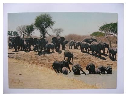 Cameroun Parc National De Waza  La Mare Aux Elephanrs    Alain Denis - Elephants