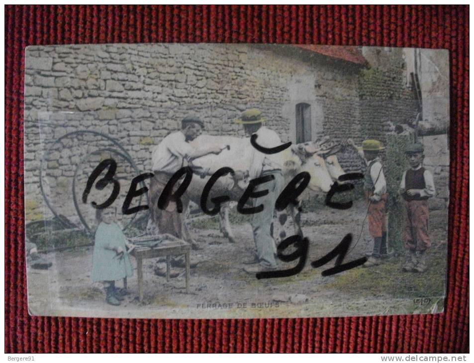 FERRAGE DE BOEUFS CHER - France