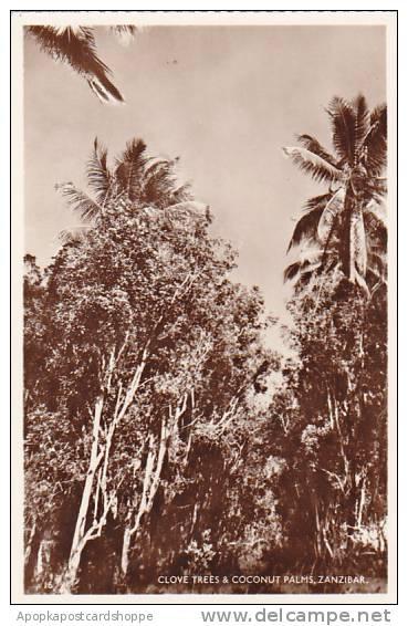 Tanzania Zanzibar Clove Trees & Coconut Palms Real Photo - Tanzania