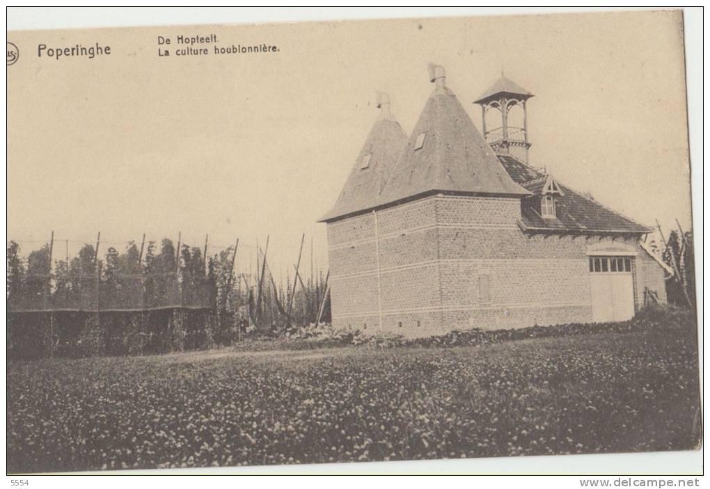 Cpa     Belgique Flandre Occidentale Poperinge   Poperinghe De Mapteelt La Culture Houblonniere - Poperinge