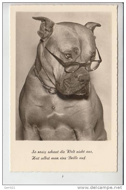 TIERE - HUNDE - BOXER - Hunde