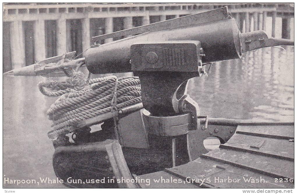 Harpoon, Whale Gun, Used In Shooting Whales, Grays Harbor, Washington, 1900-1910s - Autres