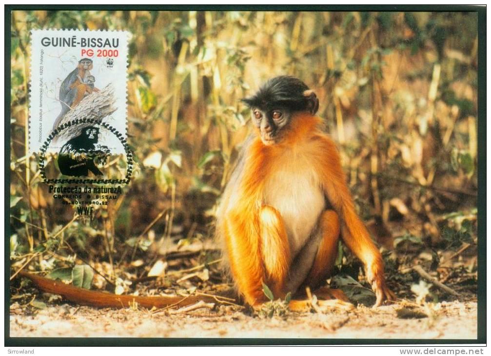 Guinea-Bissau  1992  WWF Fatango-Äffchen  (4 MK  Kpl. )  Mi: 1185-88 (4,00 EUR) - Guinea-Bissau