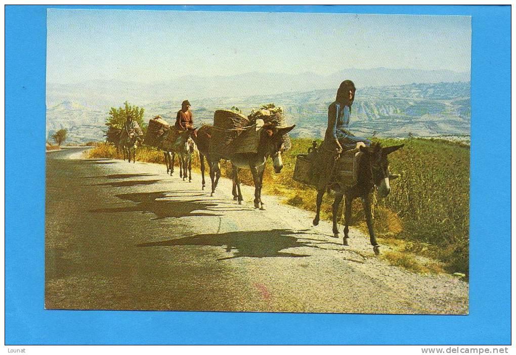CHYPRE - On Rentre Chez Soi Après La Récolte Du Raisin - Cyprus - Chypre