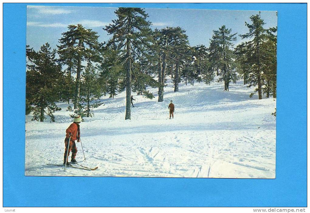 Ski-ing On Mt Troodos - The Snow-clad Mountain Troodos Offers Excellent Opportnities For Winter Sports  Cyprus - - Chypre