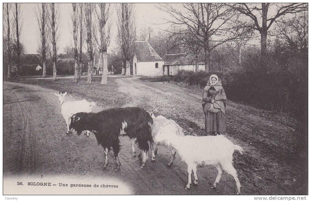 CPA 45   SOLOGNE, Une Gardeuse De Chèvres.. (animée) - France