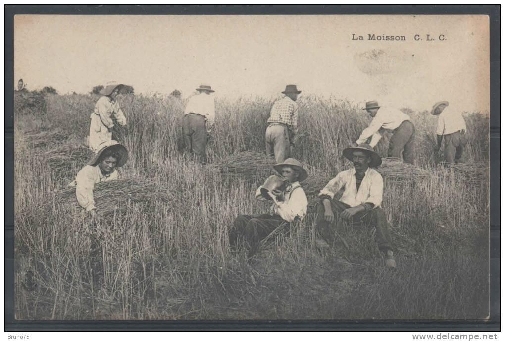 La Moisson - CLC - Cultivation