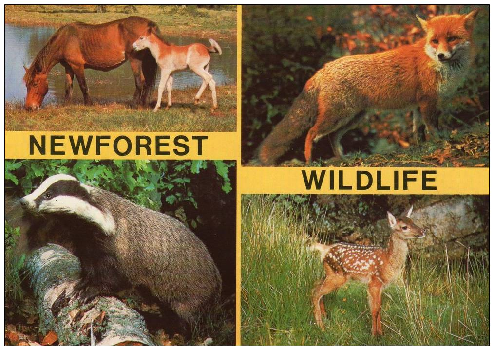 Tiere - Animals - New Forest Ponies, Rotfuchs, Dachs, Reh - Horse ...