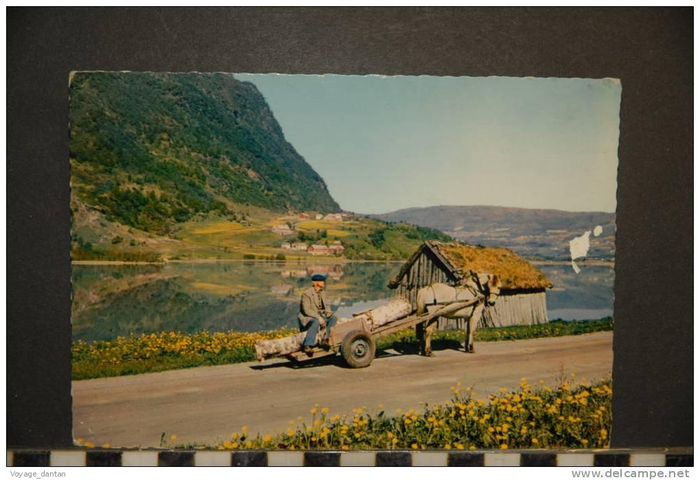 NORVEGE NORWAY  NORGE   BREIMSVATN   THE BREIMSVATN LAKE   ATTELAGE    VOYAGEE 1965 - Noruega