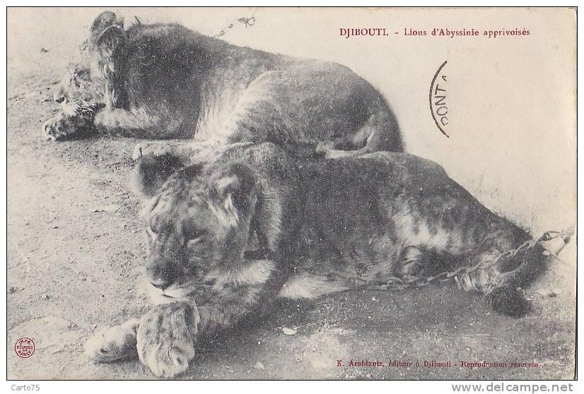 Afrique - Djibouti - Lions Lionceaux - Djibouti