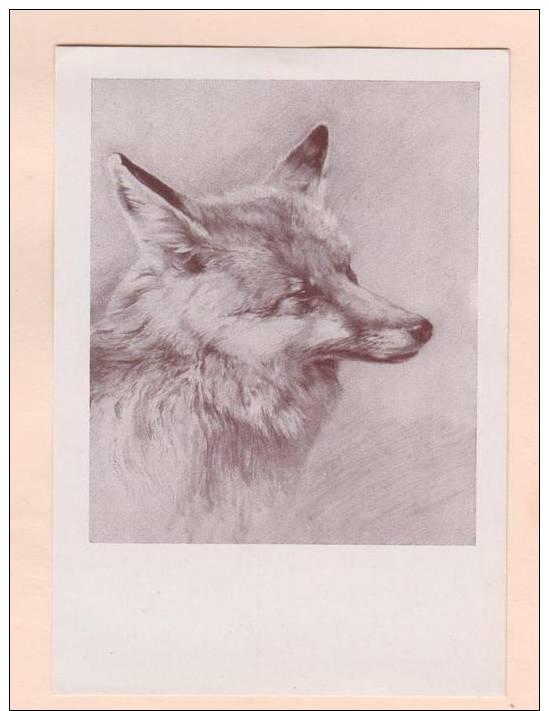 D52339 Postcard Vintage 4x6 Pencil Sketch Of Gray Fox Head, Lois Alton: Das Fuchsle, Unused - Animals