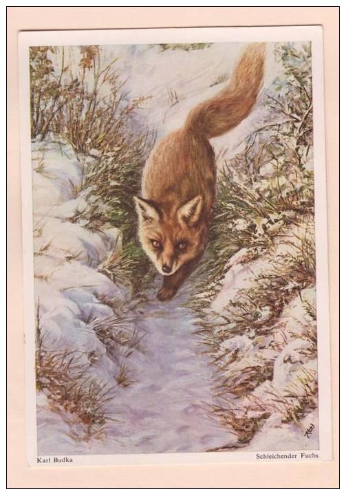 D52340 Postcard Vintage 4x6 Schleichender Fuchs, Red Fox, Trottong Down Snowy Path, Karl Budka, Unused - Animaux & Faune