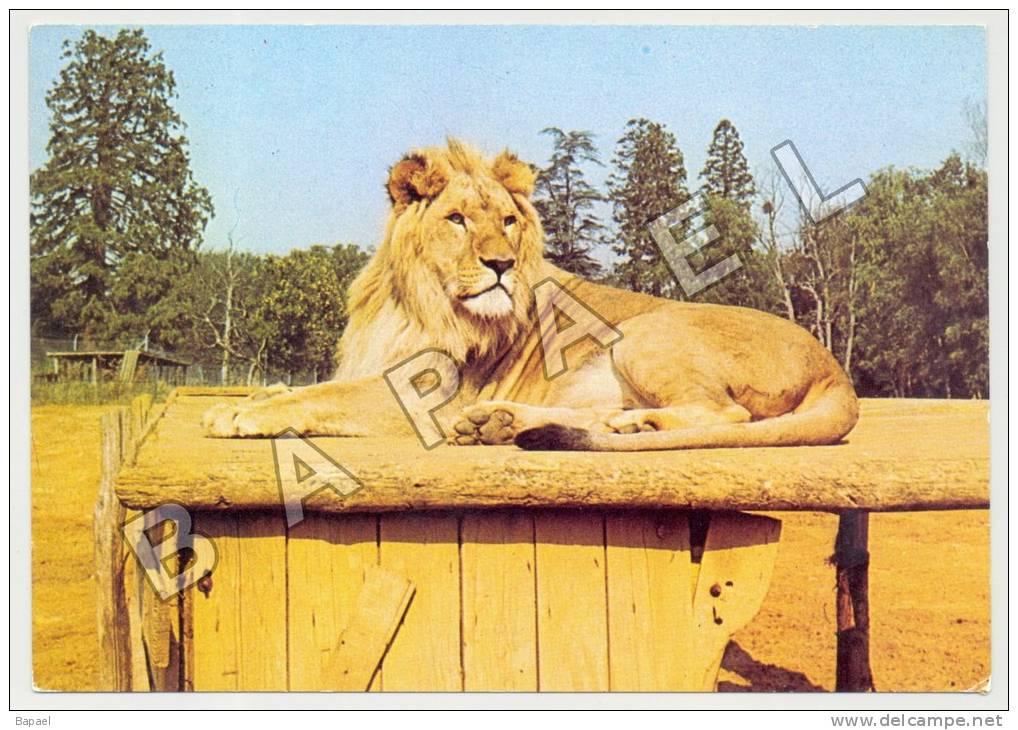 Thoiry (78) - Château De Thoiry - Lion En Liberté (JS) - Lions