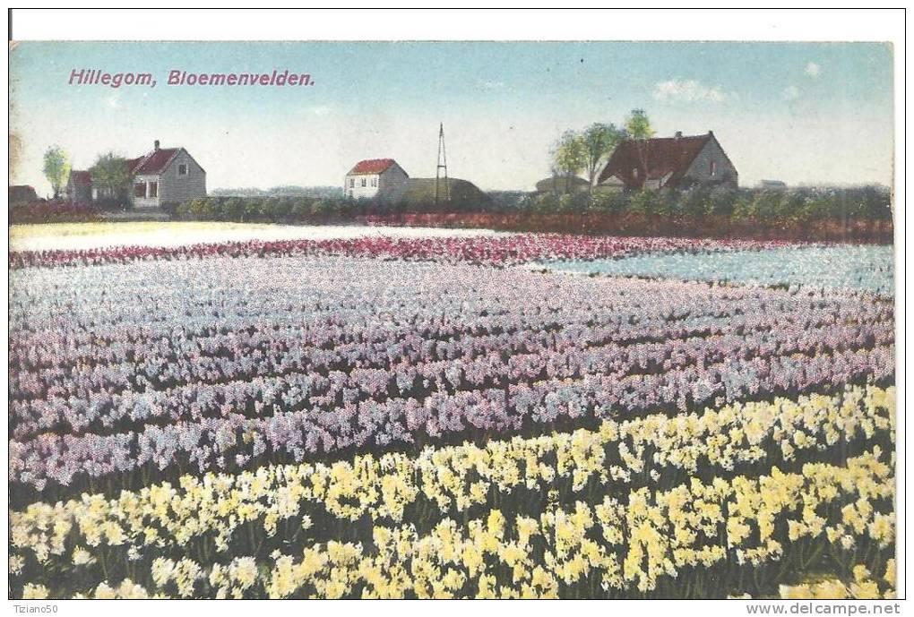 OLANDA HILLEGOM,,BLOEMENVELDEN -.FP-C1341 - Pays-Bas