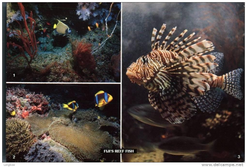 Fiji's Reef Fish - Figi