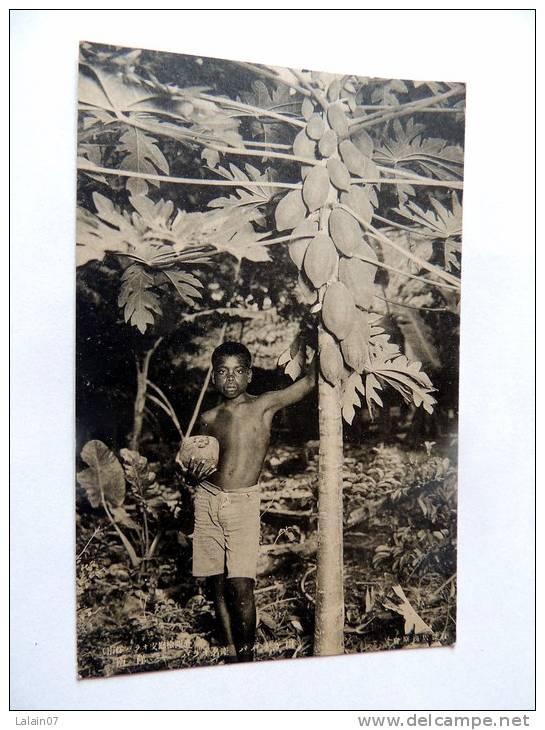 Carte Postale Ancienne : PALAU : Boy And Fruit Tree,  Caroline Islands - Palau