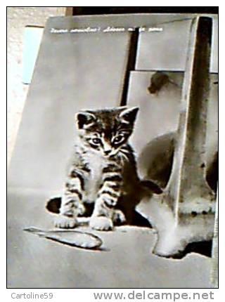 GATTO CAT MICIO  E PESCE  FISH N1960  EF14835 - Katten