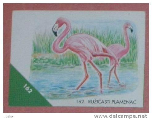 FLAMINGO ( Croatia Sticker ) Flamant Flamenco Fenicottero Bird Oiseau Ave Pajaro Vogel Uccello Birds Croatie Autocollant - Unclassified