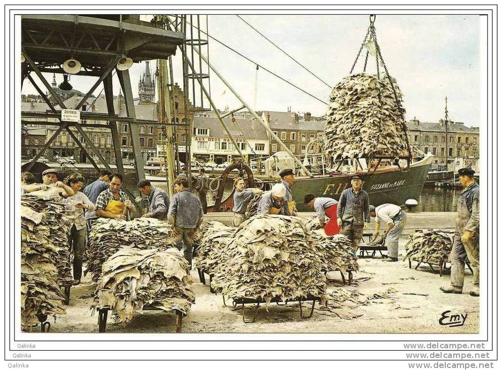 Industrie Pêche Morue Scène Travail Poisson, Quai, Port Morutier Déchargement, Grue, Seine-Maritime 76 Salaison - Pêche