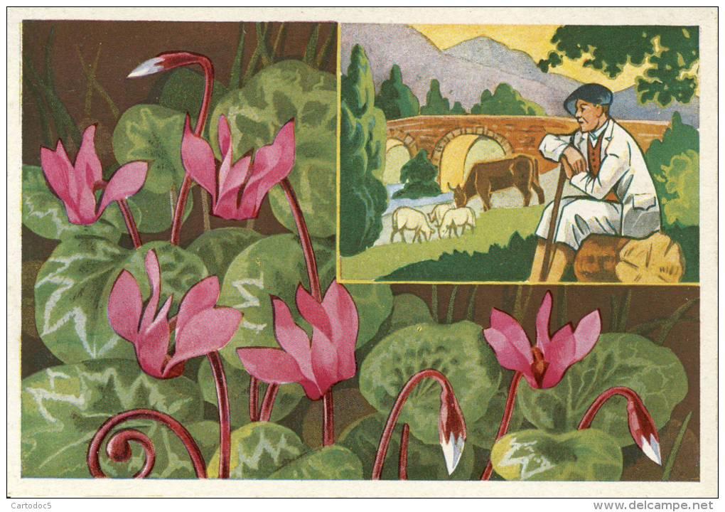 Fleurs Des Alpes  (10)  Cyclamens   Cpsm Format 10-15 - France
