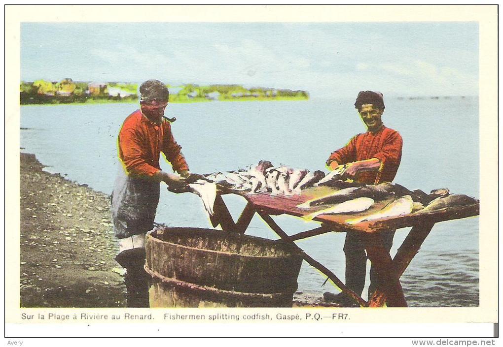 Sur La Plage A Riviere Au Renard, Fishermen Splitting Codfish, Gaspe, Quebec - Gaspé