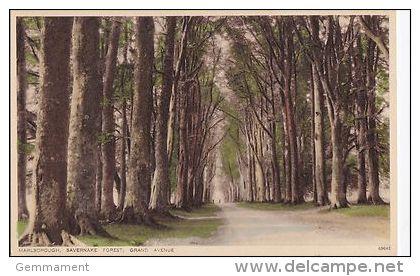 SAVERNAKE  FOREST. MARLBOROUGH - GRAND AVENUE - Angleterre